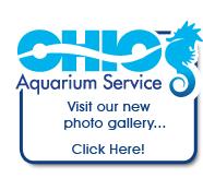 Saltwater Aquariums - Complete Aquarium and Pond Service and